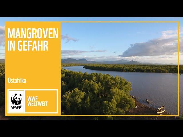 Ostafrika: Mangroven in Gefahr | WWF Weltweit | WWF Deutschland