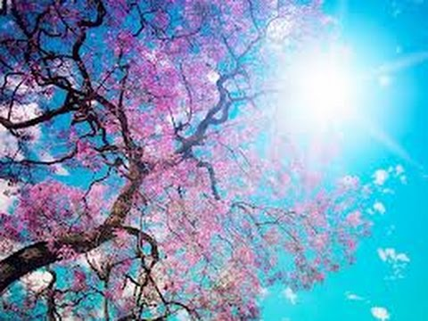 spring landscape youtube