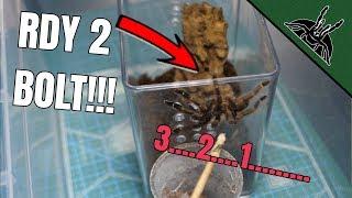 unexpected-bolts-tarantula-rehouse