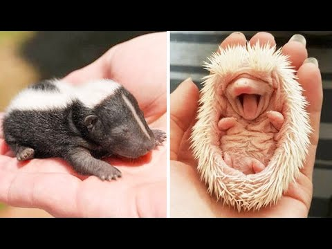 Animals SOO Cute! AWW Cute baby animals Videos Compilation Funniest and Cutest moment of animals #3