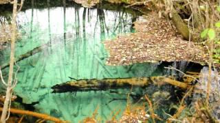 Карстовая воронка с. Бобровское Вологодская область