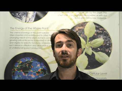 PLANTS Licensed to kill: mitochondria, chloroplasts and cell death