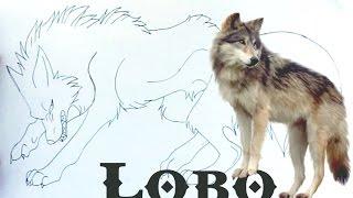 Desenhando um Lobo (Drawing a wolf) - Parte 1