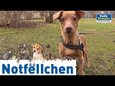 Radio Dresden - Notfellchen Januar