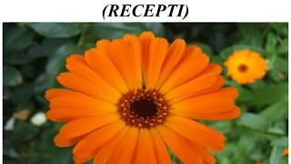 Neven – biljka za sto bolesti (RECEPTI)