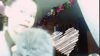 Подарок коту на Новый Год!!!😘