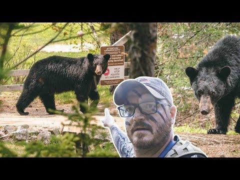 Minnesota Bear Hunting | Bowhunt Or Die Season 10 Episode 31
