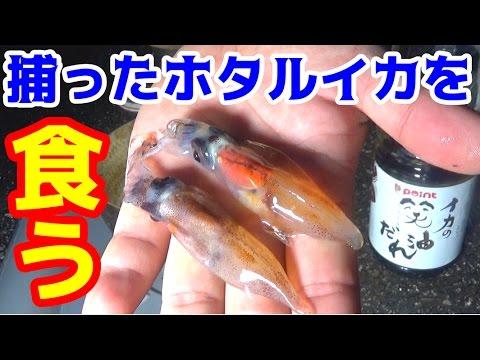 【富山湾の神秘】ホタルイカの身投げをすくって食べる #5