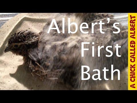 Alberts first bath