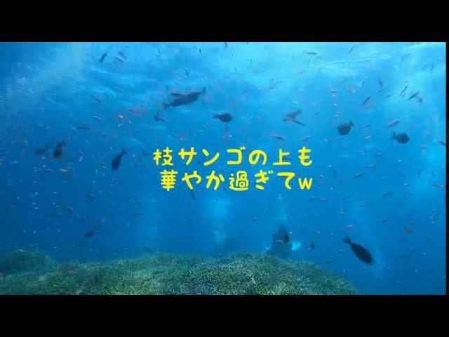 潜楽屋ムービー『西表島ダイビングが楽し過ぎて・夏』