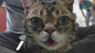 Lil BUB with Kittens!