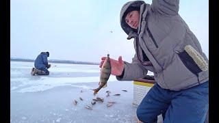 Зимняя рыбалка 17 01 2021 Ловлю со льда окуня на снасть балда Рыбалка как она есть