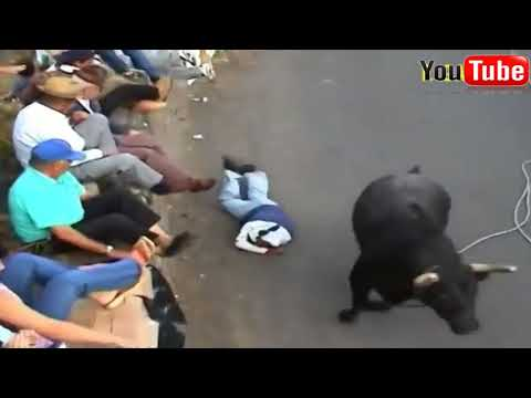 ►Best funny videos Most awesome bullfighting festival funny crazy bull fails◄