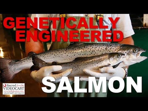 Sacred Truth Ep. 52: Genetically Engineered Salmon
