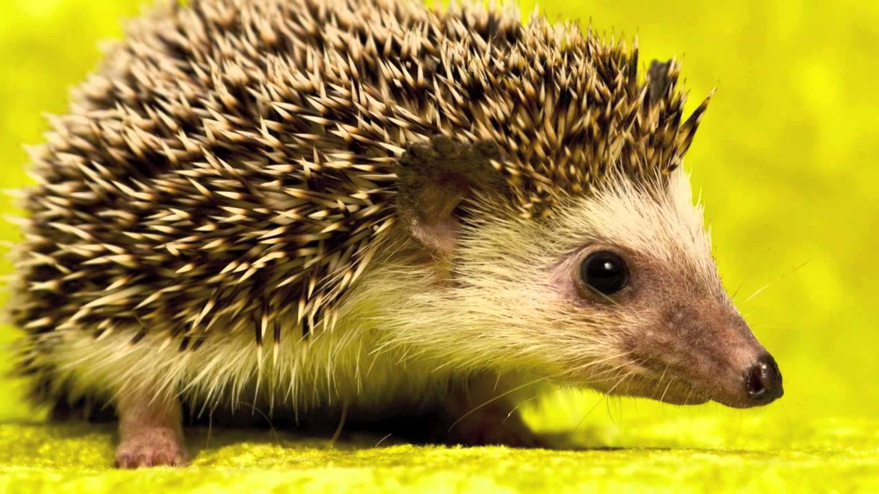 Exotic Pets That You Can Leagally Own - YouTube