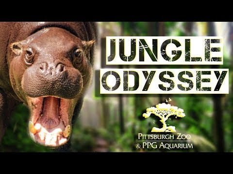 zoo-tours-ep.-30:-jungle-odyssey-||-pittsburgh-zoo