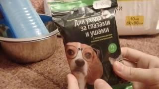 Вещи для щенка на первое время(кавалер кинг чарльз спаниель)