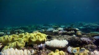 La Grande Barriera corallina australiana sta morendo