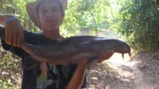 Pescaria no Rio Claro (Pt 1)