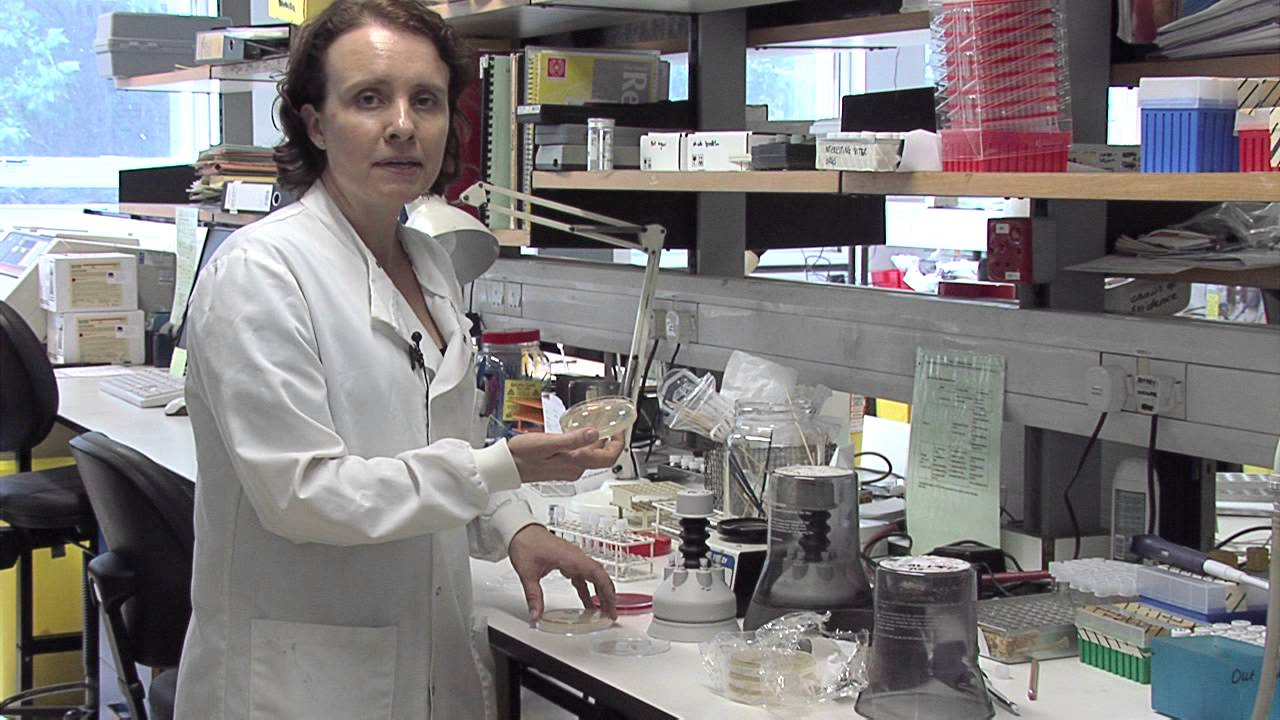 Overview Of A Medical Microbiology Laboratory   YouTube