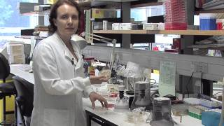 Overview of a medical microbiology laboratory