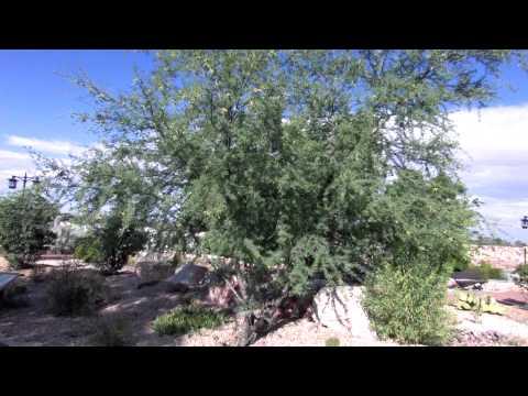 Montane Garden, El Paso Botanical Garden