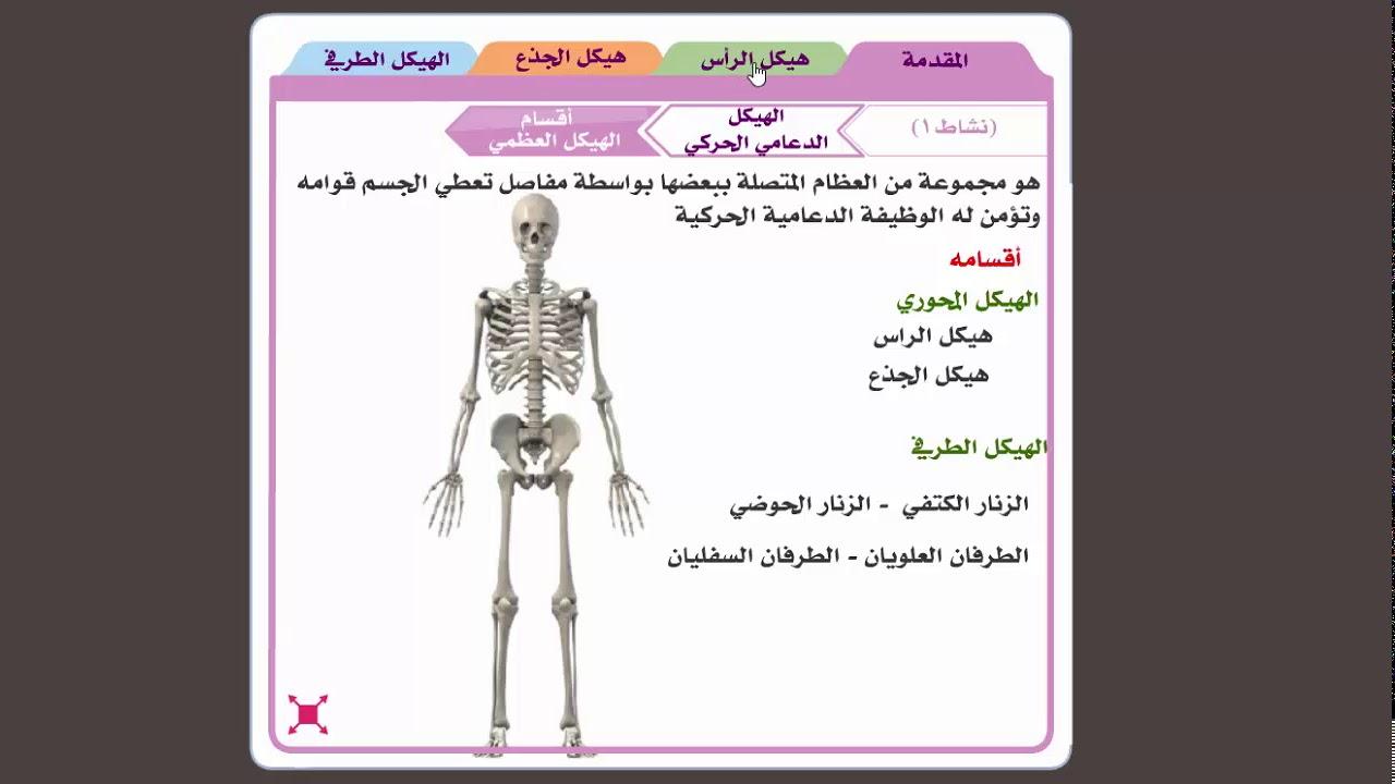 الهيكل العظمي الهيكل المحوري Youtube