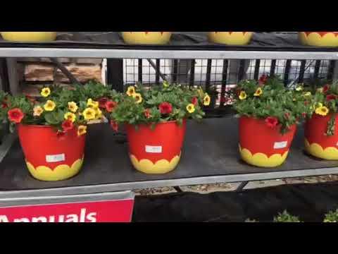 ASMR- Walmart Garden Center Shopping For Plants / Talking & Whispering