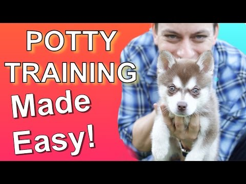 How To Potty Train Your Puppy EASILY! Everything You Need To Know!