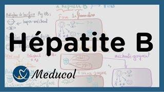 Hépatite B: transmission, symptômes,  et interpréter la sérologie hepatite B