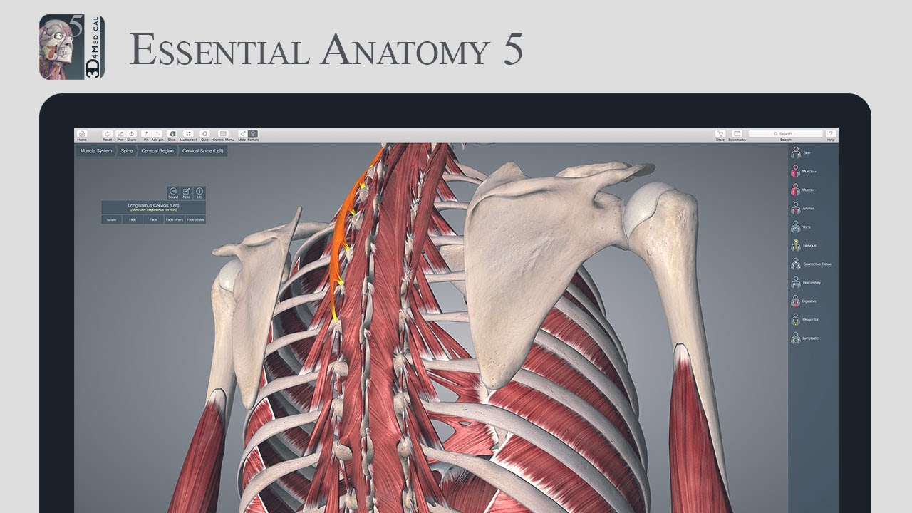 Essential Anatomy System Series Muscles Youtube