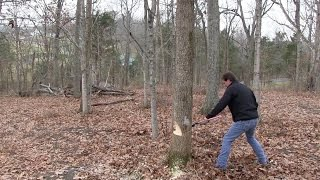 How-To Cut Down Trees (Safely)