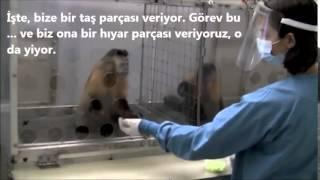"""""""Eşit İşe Eşit Ücret"""" İlkesi ve Maymunlar"""
