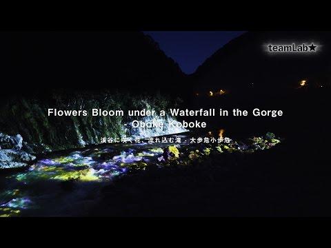 Flowers Bloom under a Waterfall in the Gorge - Oboke Koboke / 溪谷に咲く花、流れ込む滝