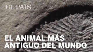 'DICKINSONIA', el animal MÁS ANTIGUO del mundo | Materia