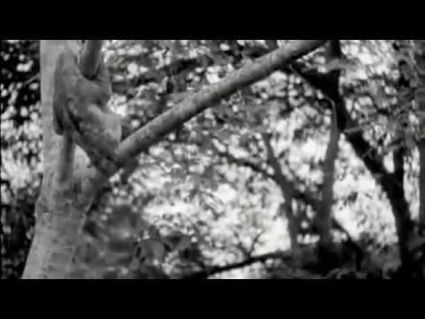 Ecuador y la aventura petrolera 1949