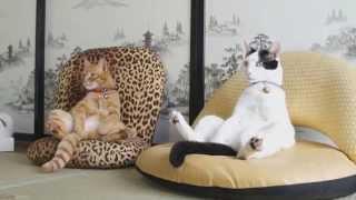 Смешные кошки. Коллекция октября 2013г.