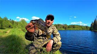 Секретного озера больше НЕТ Отводной поводок ловит всегда Рыбалка на лесном озере