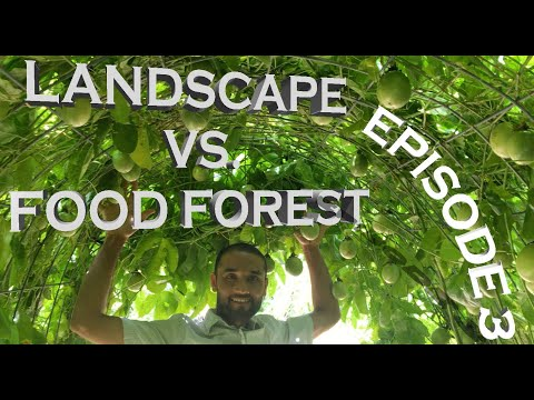Landscape VS Food Forest: Episode 3: Creating a Beautiful & Edible Passion Fruit Tunnel