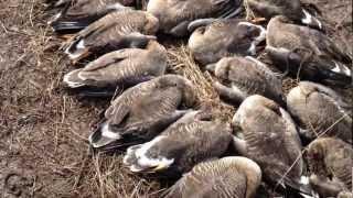 охота на гуся 2012 весна