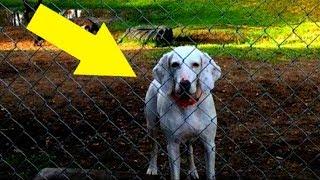 Hund flüchtet 11mal vor seinen Besitzern, dann versteht das Tierheim – Er will ihnen etwas sagen!