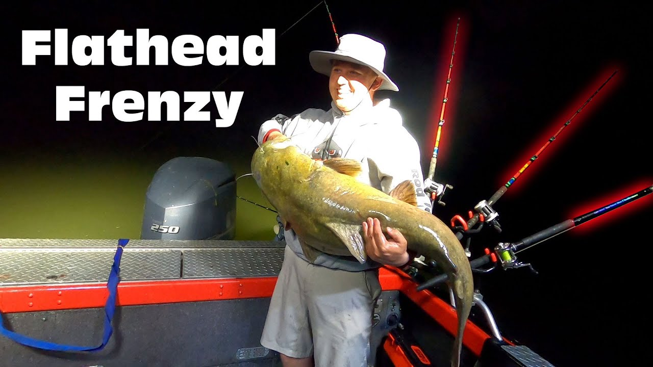 All night Catfishing Adventure, Catching the North American Flathead Catfish.