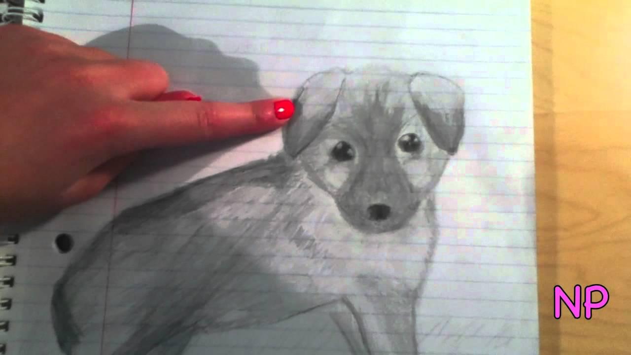 German Shepherd Puppy Drawing Youtube