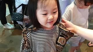 파충류 lover 이나♡ 부산 남포동 위드쥬 볼파이톤 …