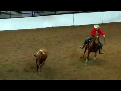 2017 Calgary Stampede Open Class Team Cattle Penning Champions