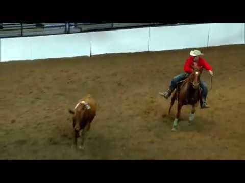 2017 Calgary Stampede Open Class Team Cattle Penning