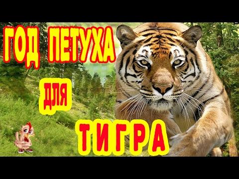 ГОД ПЕТУХА ДЛЯ ТИГРА. ГОРОСКОП 2017 ТИГР