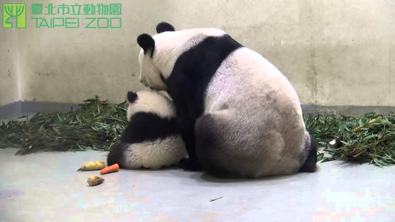 圓仔和媽媽吃晚餐 Yuan Zai Eats Dinner with Yuan Yuan - YouTube