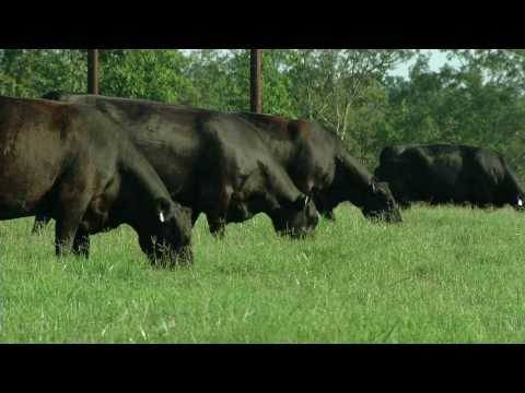 Preparing Your Annual Beef Cattle Forage Program