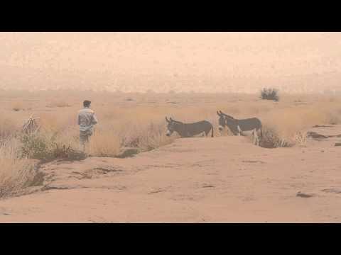 Wild donkeys in Morocco